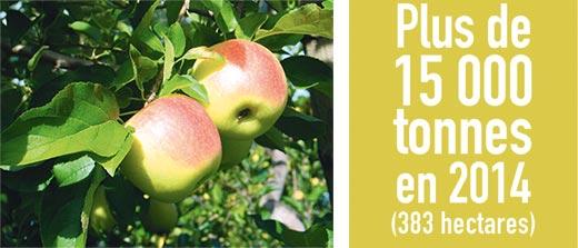 gros-plan-pommes